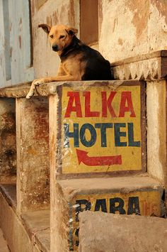 Hotel Guard Dog Great Photos, Cool Pictures, Street Dogs, India And Pakistan, Woodland Creatures, Mans Best Friend, Wonders Of The World, Dog Cat, Asia