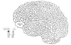 Neurociências em benefício da Educação!: Ponto de vista!