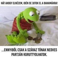 29 Super ideas for memes reaction kermit Funny Kermit Memes, Funniest Hilarious Memes, Funny Relatable Memes, Funny Posts, New Memes, Love Memes, Really Funny Memes, Stupid Memes, Memes Humor