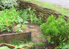 How to Make a Wattle Fence - I like this photo - uses stakes, fence only 2' high - this is what I need for berries and better than the wattle fence I made today. :)