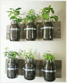 Kitchen herbs using Mason jars