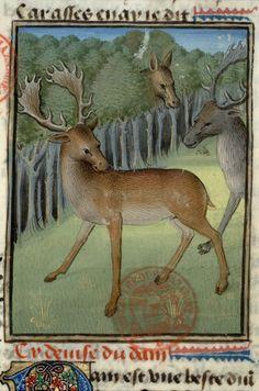 Le livre de la chasse fait et compilé par Gaston, qui jadiz fu conte de Fois, seigneur de Bearn Cote : Date : Milieu du XVe siècle