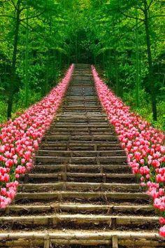 Tulip Stairs, Kyoto, Japan!