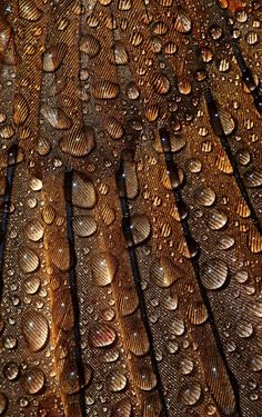 : hydrophobic wings of a black bird Mabon, Patterns In Nature, Textures Patterns, Fotografia Macro, Brown Eyed Girls, Brown Aesthetic, Rainbow Aesthetic, Dew Drops, Macro Photography
