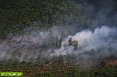 A peatland burns in Riau, Indonesia, spewing haze into the atmosphere. Photo by Rhett A. Butler