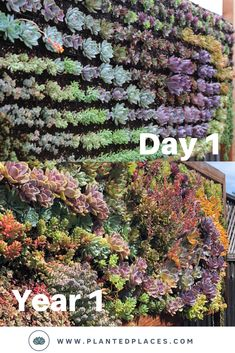 Custom Living Wall - Succulent Swirl Planted Places transforms your empty interior walls into a beau Succulent Landscaping, Succulent Gardening, Succulents Garden, Succulent Wall Gardens, Succulent Wall Diy, Succulent Display, Hanging Succulents, Hanging Plants, Leafy Plants