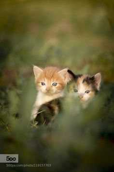 kittens by DinaMoe. Please Like http://fb.me/go4photos and Follow @go4fotos Thank You. :-)