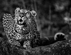 23дико эмоциональных фотографии животных