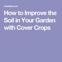 How to Improve the Soil in Your Garden with Cover Crops