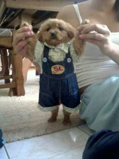 can someone please find this puppy for me? Honestly, I'm not even sure if something this cute is legal;)