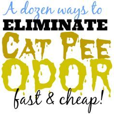 Best cat spray cleaner best cat urine remover,best way to clean cat pee carpet cleaner to get rid of cat urine,cat peeing in new house cat urine deodorizer. Cat Pee Smell, Cat Urine Smells, Remove Cat Urine Smell, Cat Urine Remover, Odor Remover, Party Deco, Pet Odors, Cleaning Pet Urine, Quiz