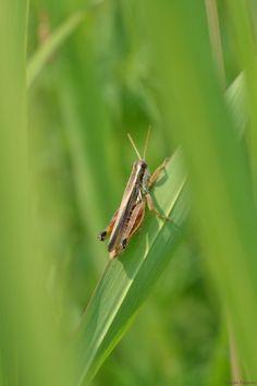 Cricket! by Claudia Crempien - PhotoBlog