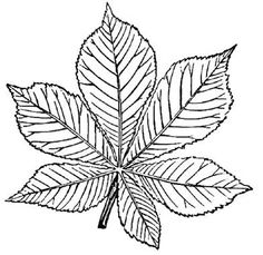 Thousands of printable coloring pages, worksheets, and mini books. Customize and create your own original pages for free. Leaf Coloring Page, Colouring Pages, Printable Coloring Pages, Fall Coloring, Leaf Drawing, Motif Floral, Kids Prints, China Painting, Flower Art