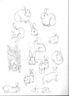 Sketches for my design of old Hazel from the Watership Down epilogue. Drawing old looking rabbits is difficult because they never really look old. Old Hazel Concepts 3 Bunny Sketches, Animal Sketches, Animal Drawings, Cute Drawings, Art Sketches, Rabbit Drawing, Rabbit Art, Lapin Art, Bunny Art