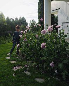 My son standing beside stunning Lilac Pom Pom poppies Poppies, Lilac, Garden, Garten, Lawn And Garden, Poppy, Syringa Vulgaris, Gardens, Gardening