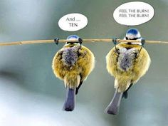Funny bird fitnes picture :D