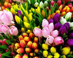 Feast your eyes on these scintillating spring blooms, now on offer  #flowers  #tulips #handmade  #bouquet  #colour  #best  #london