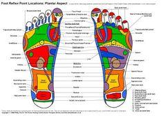 reflexology foot chart | Reflexology Charts. Foot and Hand Reflex Charts in Colour. Reflexology ...