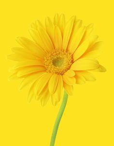 Bright yellow flower.