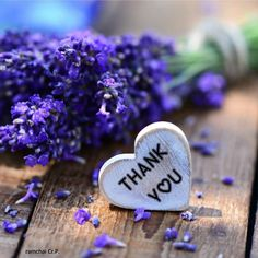 Thank You Messages Gratitude, Thank You Wishes, Thank You Greetings, Thank You Quotes, Happy Birthday Images, Happy Birthday Wishes, Birthday Greetings, Thank You Pictures, Thank You Images