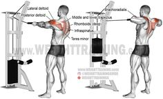 Standing cable rear delt row with rope. A compound exercise. Target muscle: Posterior Deltoid. Synergists: Infraspinatus, Teres Minor, Lateral Deltoid, Middle and Lower Trapezius, Rhomboids, Brachialis, and Brachioradialis. Dynamic stabilizer: Biceps Brachii.
