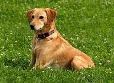 Dog Training For Obedience - The Key To Raising A Well Behaved Dog