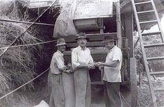 Hagyományos traktorhajtásos cséplés Dunapatajon a két világháború között.