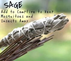 Or to cleanse your house of bad energy.  Smudging 101