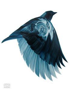 Bird - Adam S Doyle