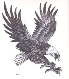 Compare Prices on Eagle Drawing- Online Shopping/Buy Low Price ...