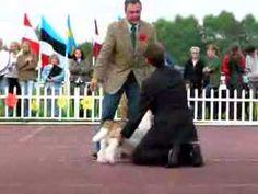 Dog Show 2007-08-03, Machiavelli Pangea, Palangos 3