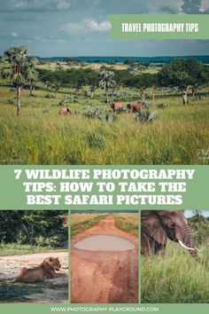 7 Wildlife Photography Tips: How to Take the Best Safari Pictures | In this wildlife photography tutorial you'll discover 7 easy wildlife photography tips including the best camera settings for wildlife photography. Click through to find out how to take awesome wildlife photos without spending a fortune on wildlife photography gear. #wildlifephotography #naturephotography #safariphotographytips #wildlifephotographytips Wildlife Photography Tips, Photography Gear, Sunset Photography, Photography Tutorials, Landscape Photography, Photography Composition, Pictures Of You, Cool Pictures, Best Cameras For Travel