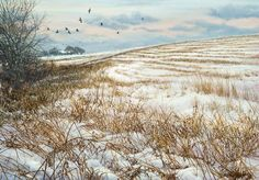 Winter Afternoon Jackdaws by Jeremy Paul