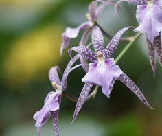 violet intergeneric orchid | Flickr - Photo Sharing!
