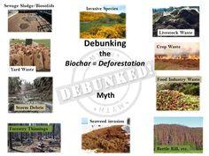 Debunking biochar deforestation myth