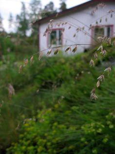 And then, the free fallthrough the garden floorinto a dream
