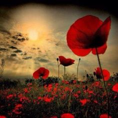 We will remember them xxx Blessed are we to be free...#rememberenceday #poppy #warhero #freedomatacost #givethanks #warriors #freedom #rememberanceday
