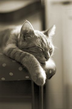 """There are people who reshape the world through force or argument, but the cat just lies there, dozing, and the world quietly reshapes itself to suit his comfort and convenience."" --Allen and Ivy Dodd"