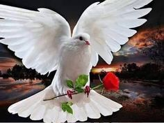Rose And Pigeon DIY Diamond Embroidery Picture Of Crystals Mosaic Diamond Painting Hobbies And Crafts Home Decoration White Pigeon, Angel Guidance, Dove Bird, Peace Dove, White Doves, We Are The World, Cross Paintings, Holy Spirit, Peace And Love