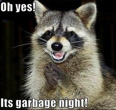 racoon humor | Animal Humor raccoon funny