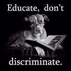 #dontbullymybreed #notabully #friendsofpitbulls #pitties #pitbulls #AdoptDontBuy #adoptdontshop #endBSL #endanimalabuse #enddogfighting