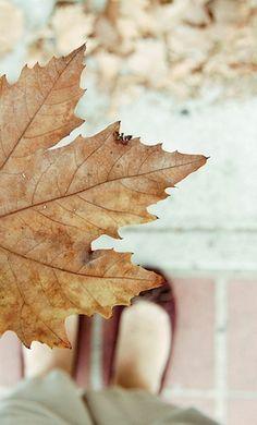 The Air In Autumn