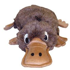 Baby Platypus On Pinterest Baby Hippo Baby Beaver And