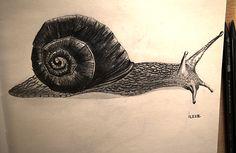Sümüklü böcek       Kurşun kalem 4B-6B-8B Snail, Sketches, Animals, Drawings, Animales, Animaux, Animal, Doodles, Animais
