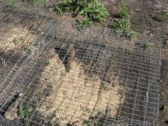 PIGEON TRAP TO CATCH DOVES ? | Trapper Talk | Trapperman.com Forums