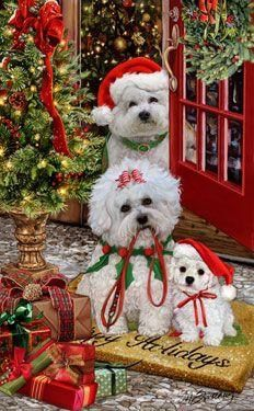 Bichon Frise Christmas Holiday Cards are 8 x 5 and come in packages of 12 cards. One design per package. All designs include envelopes, your personal message, and choice of greeting. Christmas Scenes, Noel Christmas, Christmas Animals, Vintage Christmas Cards, All Things Christmas, Christmas Pets, Holiday Cards, Illustration Noel, Christmas Illustration