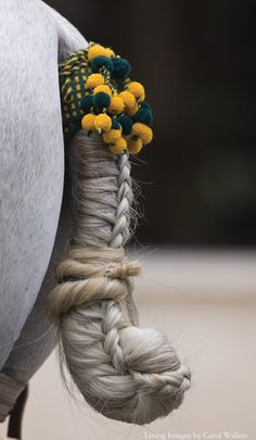 Calesera braid used for carriage horses ...