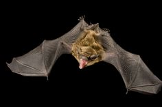 In honor of Bat Appreciation Day, see up-close photos of these majestic flying mammals.