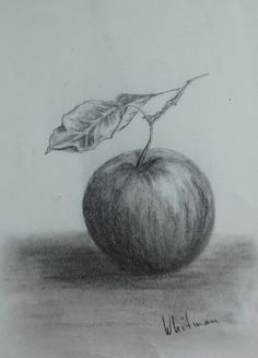 $15 Apple with a leaf, still life sketch. Original art, graphite pencil drawing by Elena Whitman.