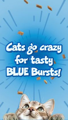 Try these crunchy, creamy cat treats that feature real meat! Cute Little Animals, Cute Funny Animals, Cute Cats, Funny Animal Memes, Funny Memes, Animal Jokes, The Craft Movie, Gato Gif, Cat Treats